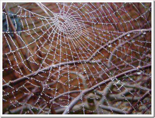 Spiderweb by cybershotking on flickr